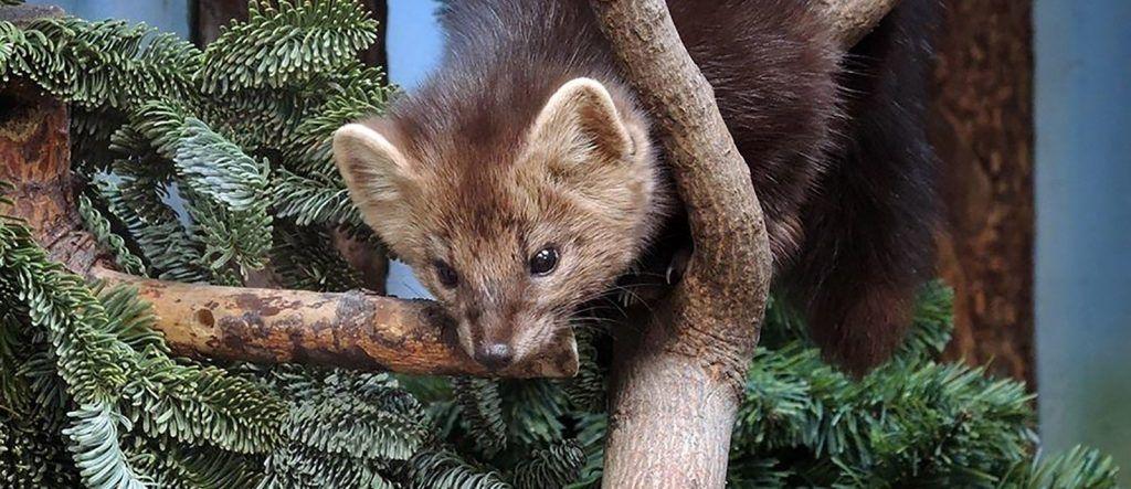 Нераспроданные ели и сосны подарят животным Московского зоопарка