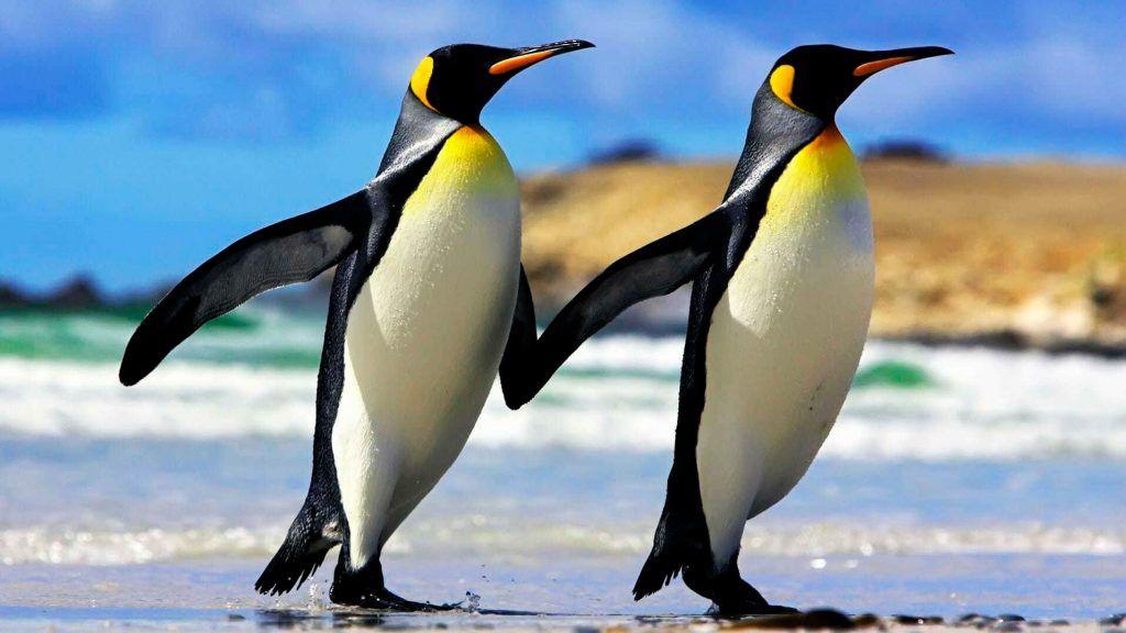 Гости Биологического музея отметят День осведомленности о пингвинах. Фото предоставлено пресс-службой музея