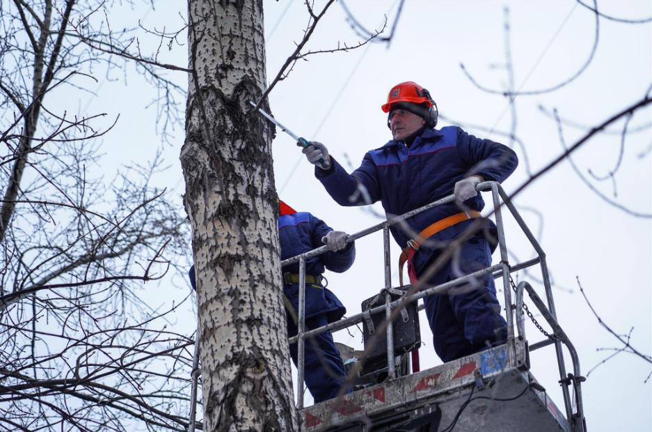 Семинар по обрезке деревьев провели для сотрудников «Жилищника» в Центральном округе