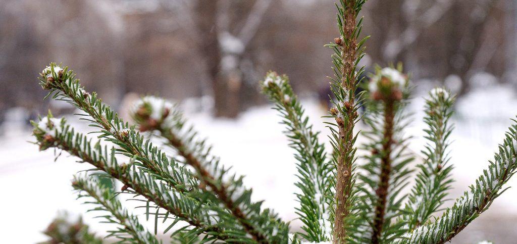 Круговорот елей: 36 пунктов приема новогодних деревьев открыли в центре столицы