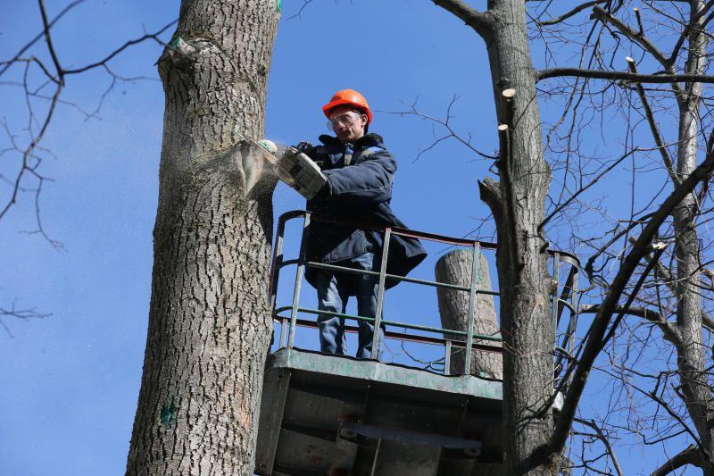 Деревья кронируют в районе Замоскворечье