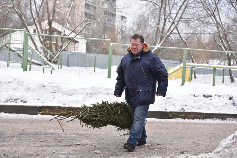 Свыше 20 елей сдали на утилизацию в пункты приема в районе Замоскворечье