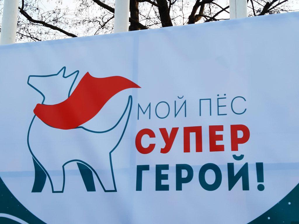 В «Красной Пресне» провели фестиваль «Мой пес – супергерой!». Фото: Екатерина Гринева