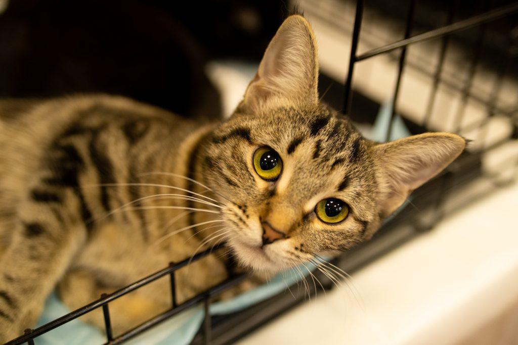 15-ая благотворительная выставка-пристройство «Каждой кошке нужен дом»