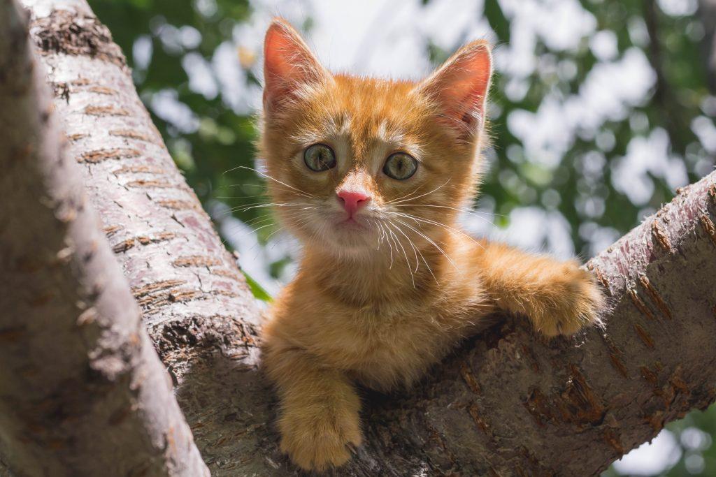 Операция «Кот». Как уберечь усатого от беды