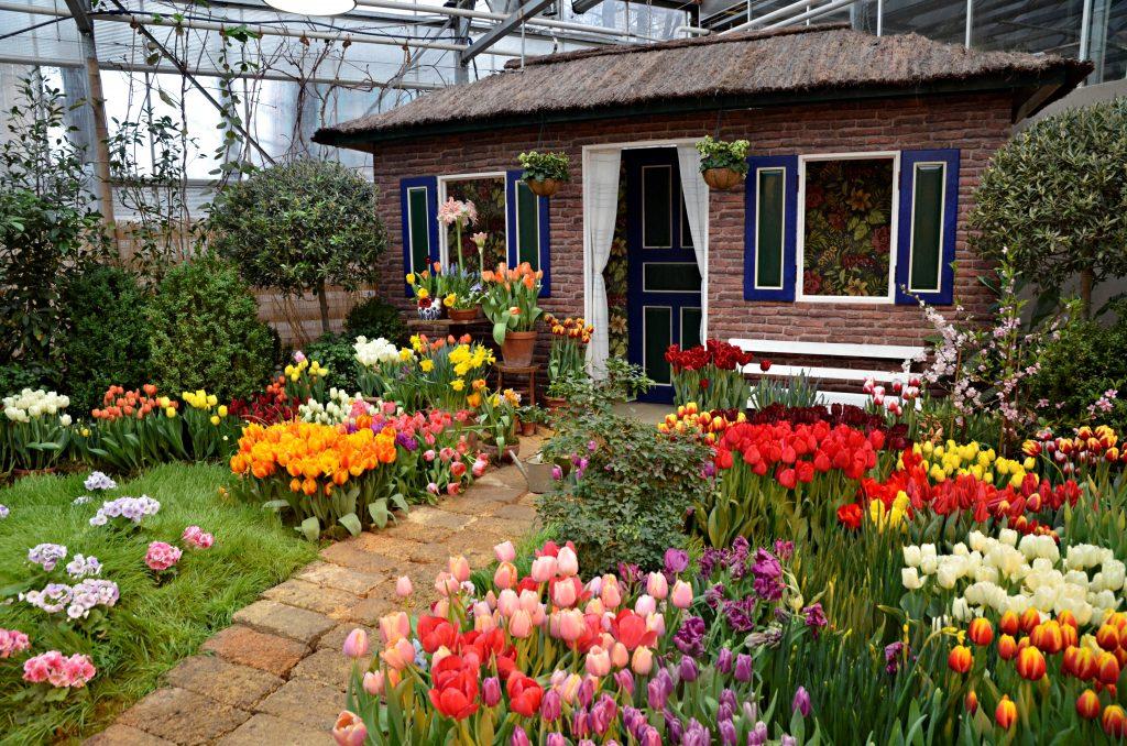 На выставке в «Аптекарском огороде» установили фотозону с имитацией голландского домика. Тут же появился небольшой палисадник с несколькими сортами тюльпанов. Фото: Анна Быкова