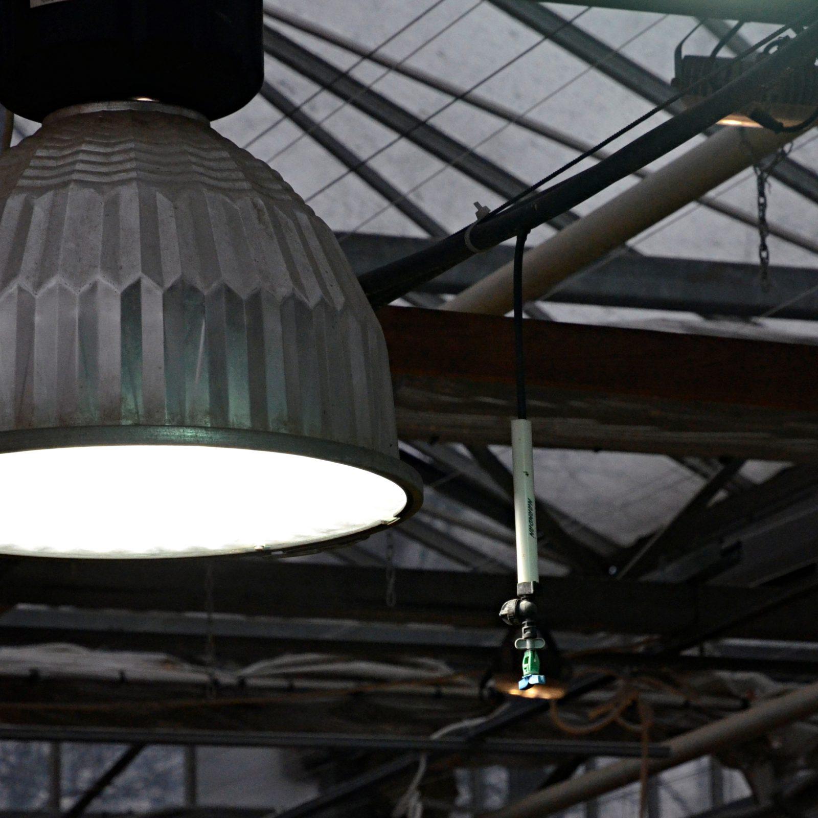 В павильоне созданы все условия для комфортного существования цветов: автоматическая система увлажнения, свет и отопление. Фото: Анна Быкова