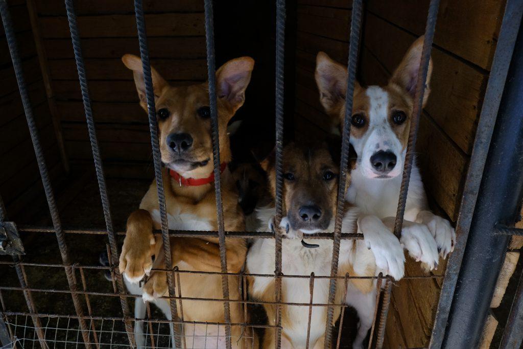 Горожане забрали более двух тысяч собак из приютов