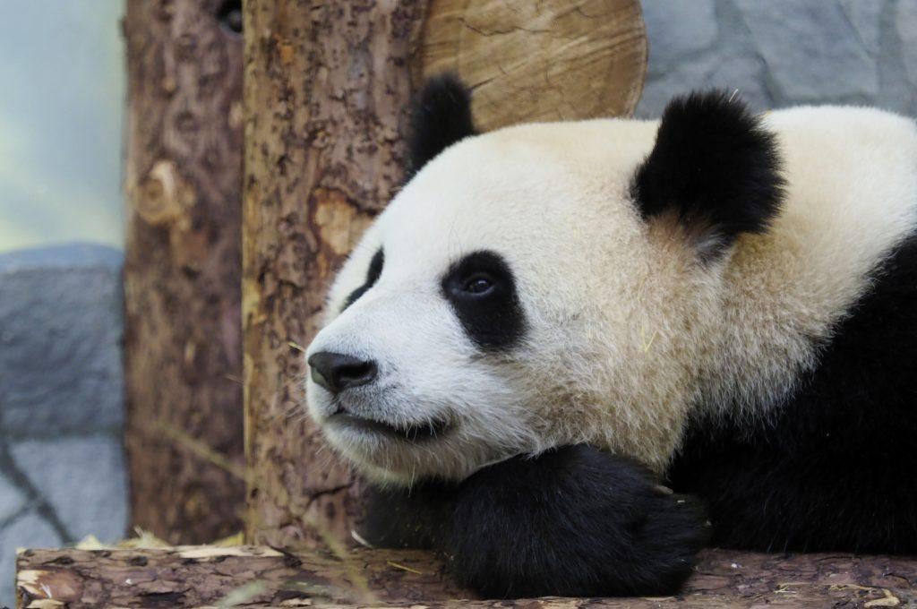 Тайны Московского зоопарка раскроют в Главархиве