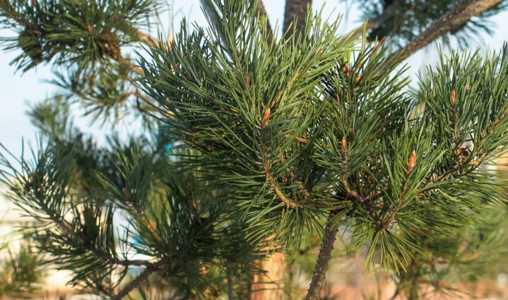 Елочный круговорот продолжается: более 290 деревьев сдали жители района Замоскворечье в пункты приема