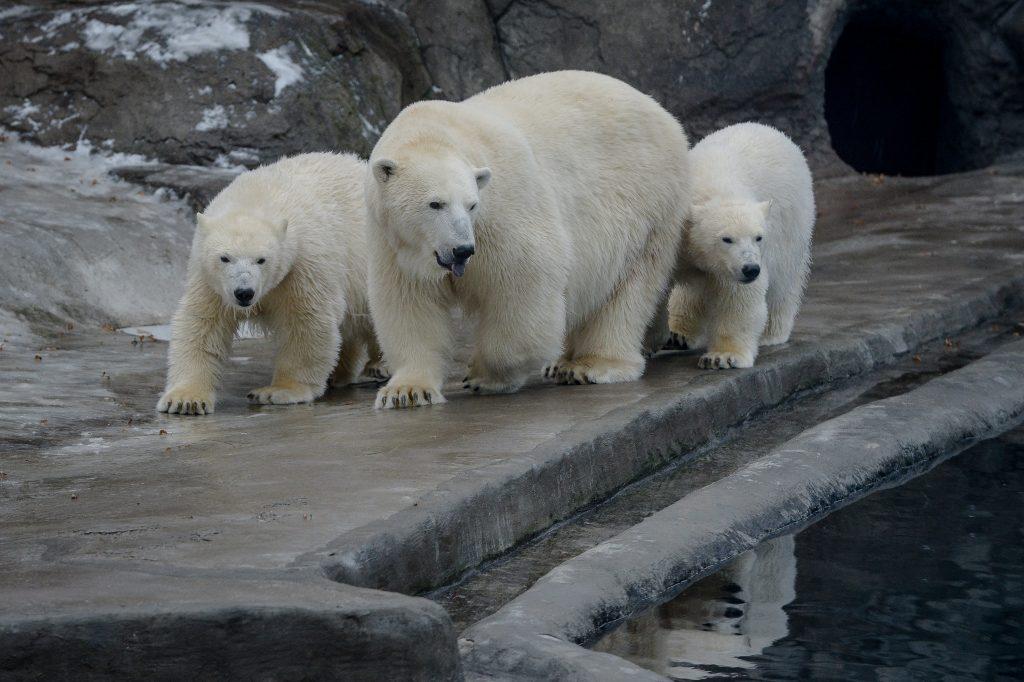 Московский зоопарк приготовил бесплатные билеты для гостей в белом