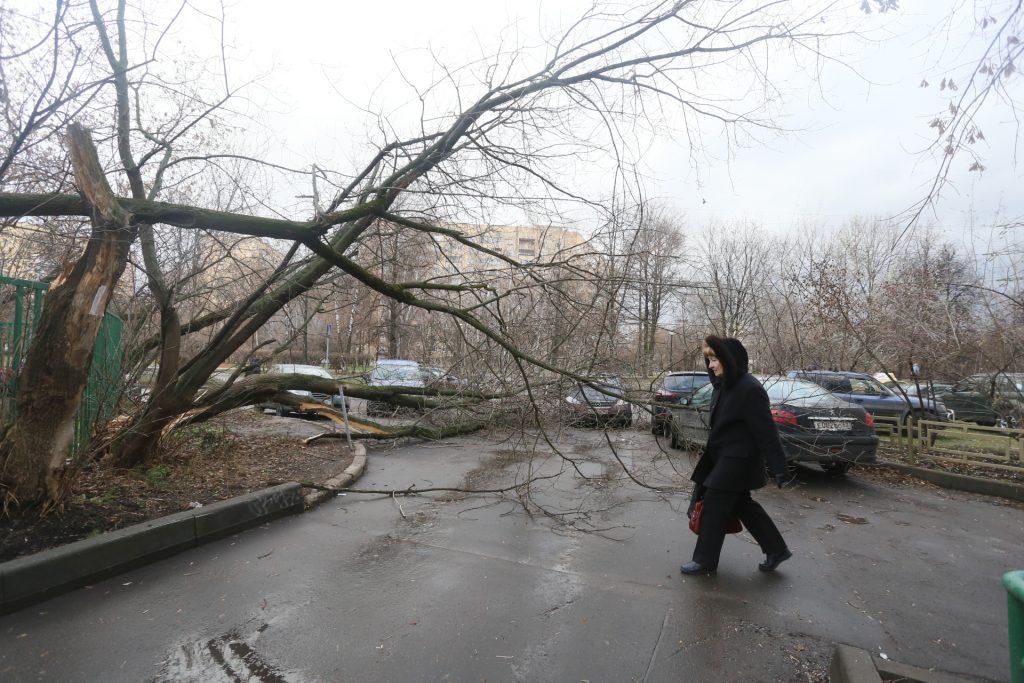 МЧС, ЦОДД и АМПП посоветовали москвичам быть осторожнее с парковкой из-за ветра