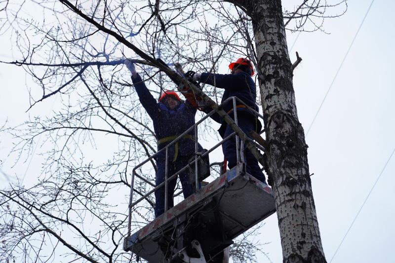 Деревья подготовят к весеннему сезону во дворах Тверского района. Фото: Денис Кондратьев