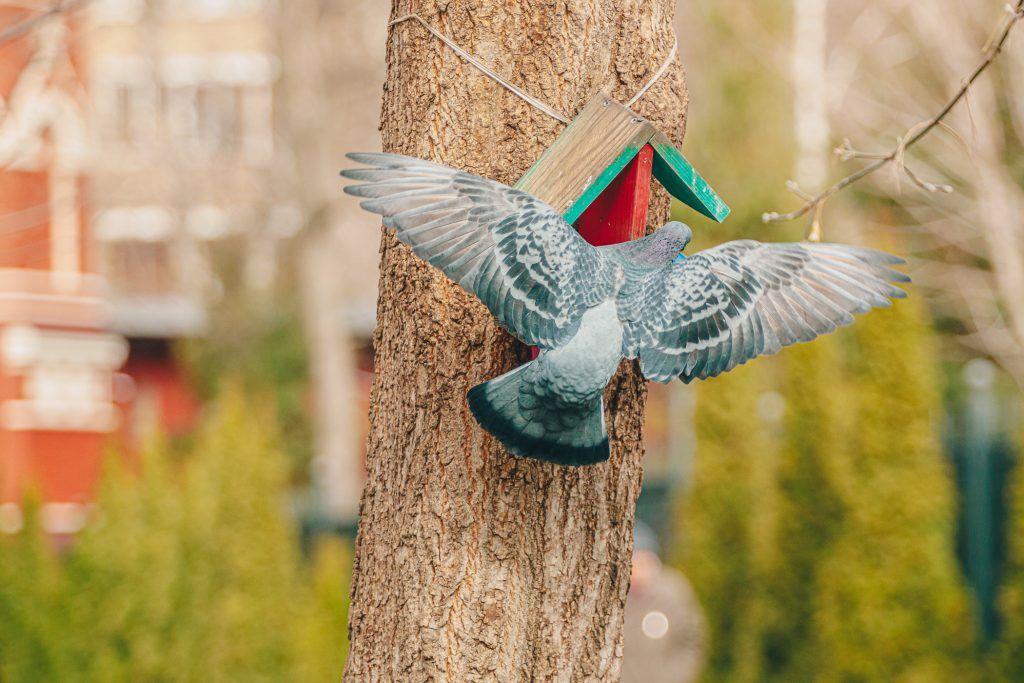 Серия художественных мастер-классов к Международному дню птиц