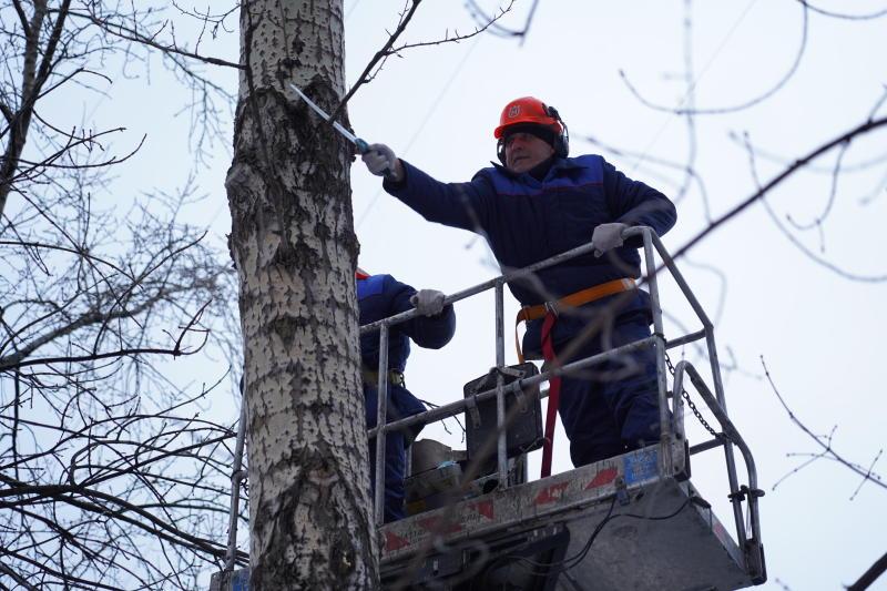 Сотрудники «Жилищника» подготовили к весне 120 деревьев в районе Замоскворечье