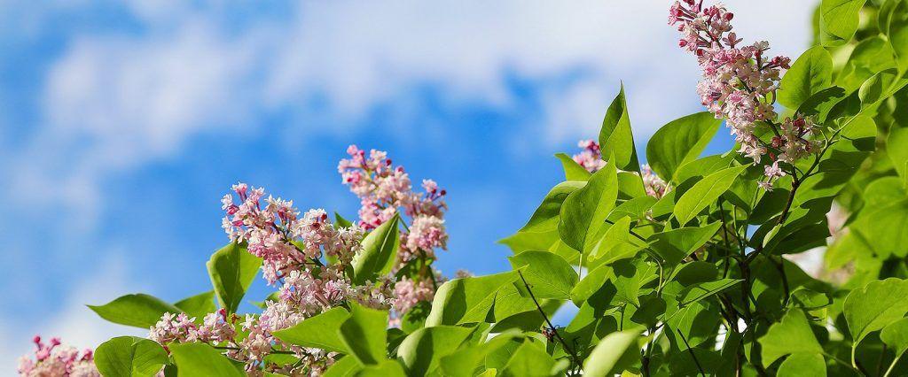 Боярышник и чубушник: один из дворов Таганского района озеленят