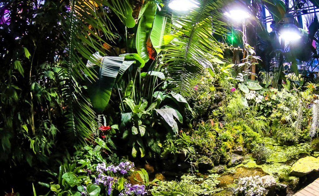 Экскурсию по оранжерее для детей подготовили в Биологическом музее