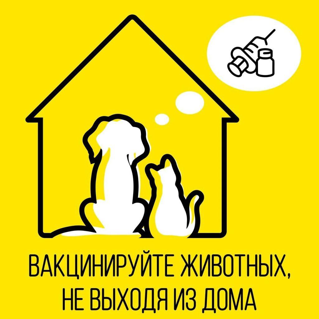 Ветеринары смогут вакцинировать на дому домашних питомцев в столице