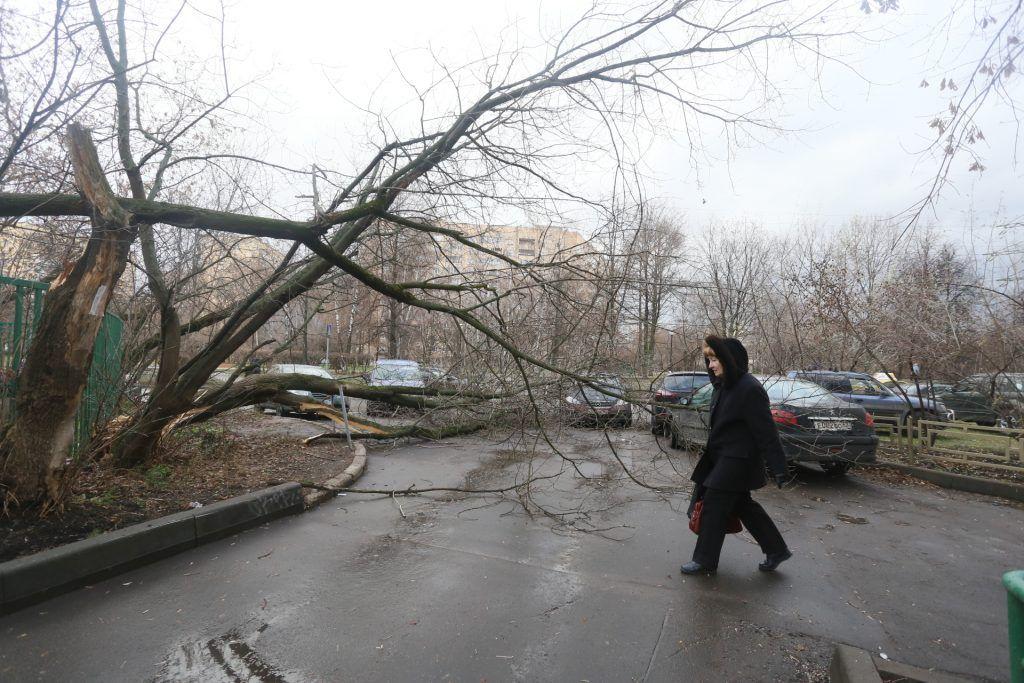 Петр Бирюков заявил о 33 поваленных деревьях и семи поврежденных авто в Москве