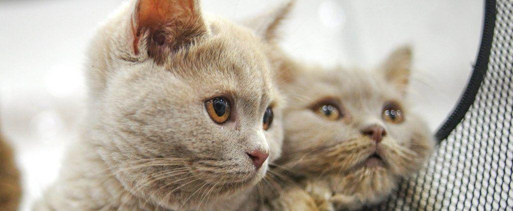 Домашние животные не могут быть переносчиками коронавируса