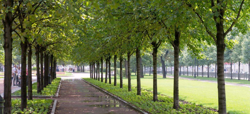 Зеленые насаждения кронировали на улицах Таганская и Рабочая