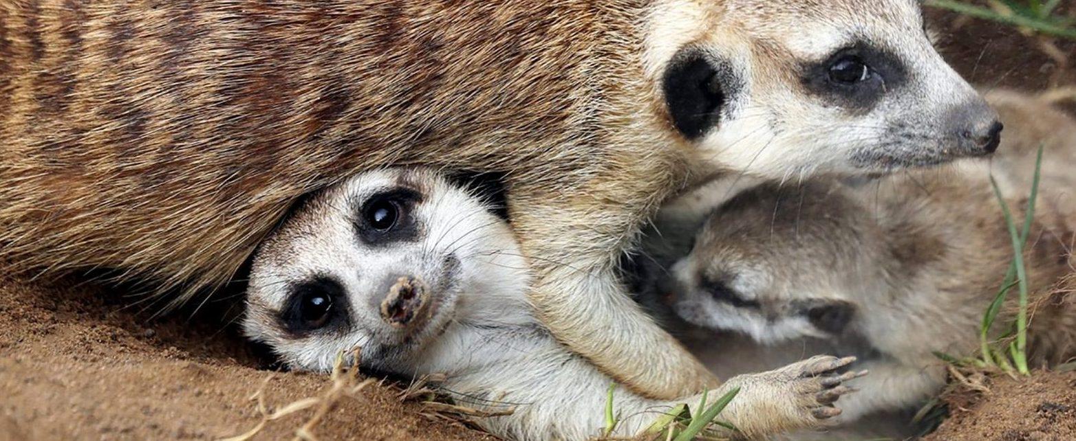 Как ухаживать за тапирами и пандами рассказали специалисты Московского зоопарка на проекте #Москвастобой. Фото: сайт мэра Москвы