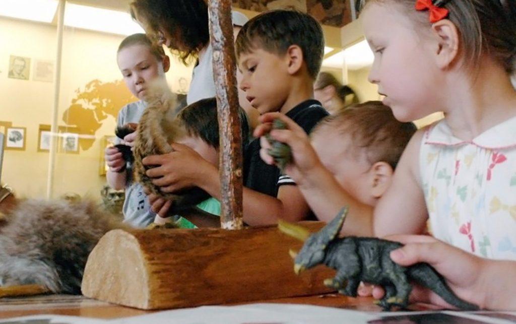 Первые обзорные экскурсии после отмены ограничительных мер проведут в Биологическом музее