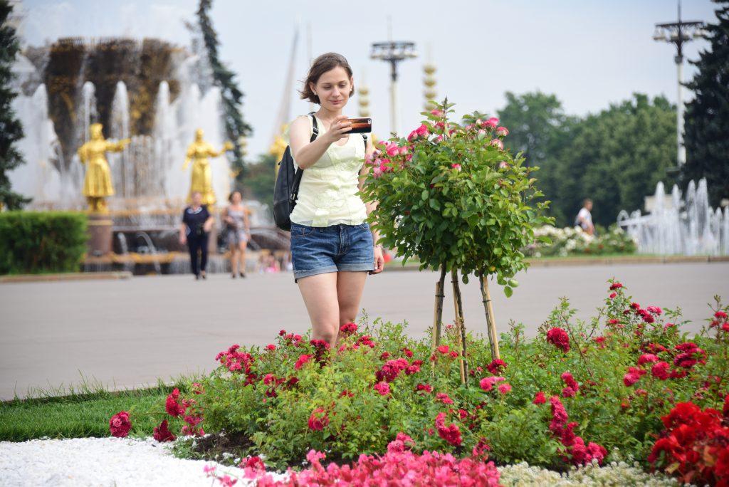 Более 44 тысяч растений украсили «поля Кандинского» на ВДНХ
