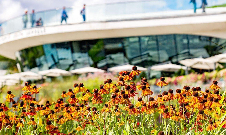 Ирис и шалфей: свыше 16 тысяч цветов высадили в парке «Зарядье». Фото: сайт мэра Москвы