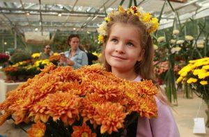 Юная посетительница фестиваля Мария Аксенова рассматривает хризантемы. Фото: Наталия Нечаева, «Вечерняя Москва»