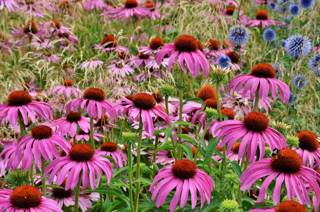 Около 350 цветов высадят в клумбы в районе Хамовники