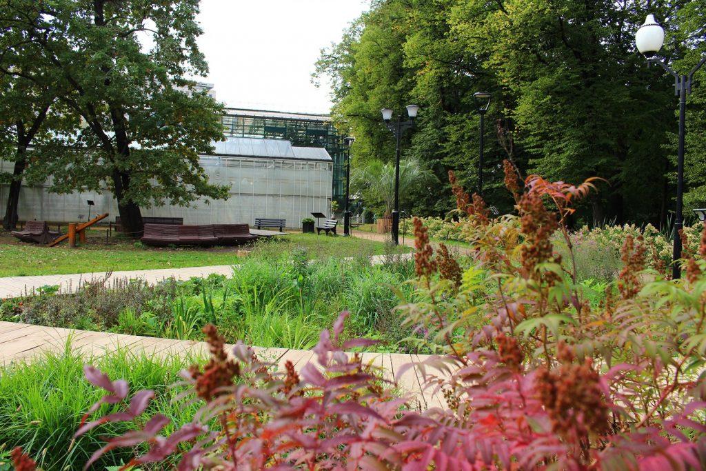 Сад дождя появится в «Аптекарском огороде»