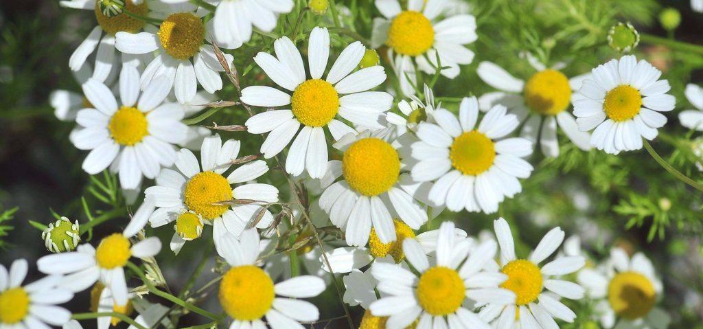Новые цветы посадили на Большой Полянке и по другим адресам в Якиманке