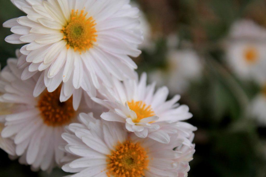 Сезон высадки многолетних цветов завершили в Москве