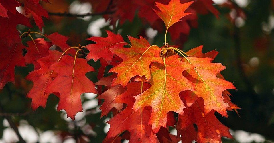 Красоту осени покажут на фотовыставке в Тургеневской библиотеке. Фото: pixabay.com