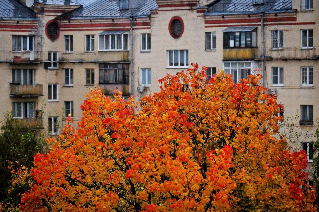 Московская температура начнет расти с четверга