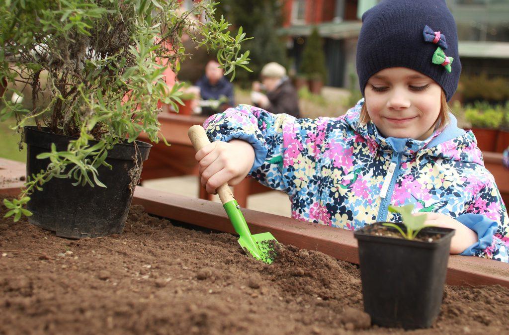 Проект «Наше дерево» принял пять тысяч новых заявок от москвичей