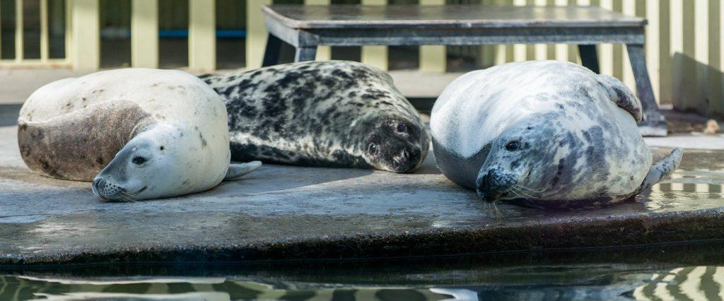 Режим работы Московского зоопарка изменится с ноября
