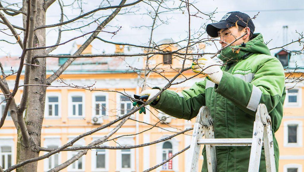 Аварийные деревья уберут по нескольким адресам вЗамоскворечье. Фото: сайт мэра Москвы