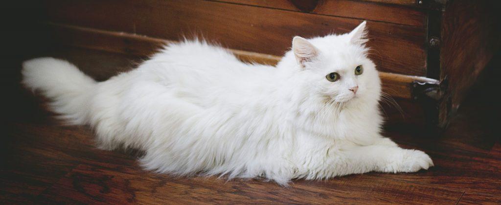 Коты — это жидкость: теорию об этом докажут на Шнобелевских чтениях в Цифровом деловом пространстве