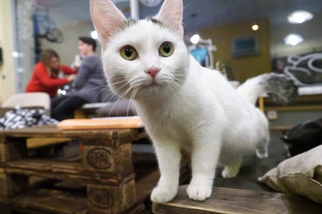 Москвичам помогут в поиске пропавших котов