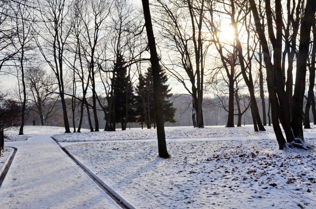 Московская температура вновь упадет до 10 градусов на выходных