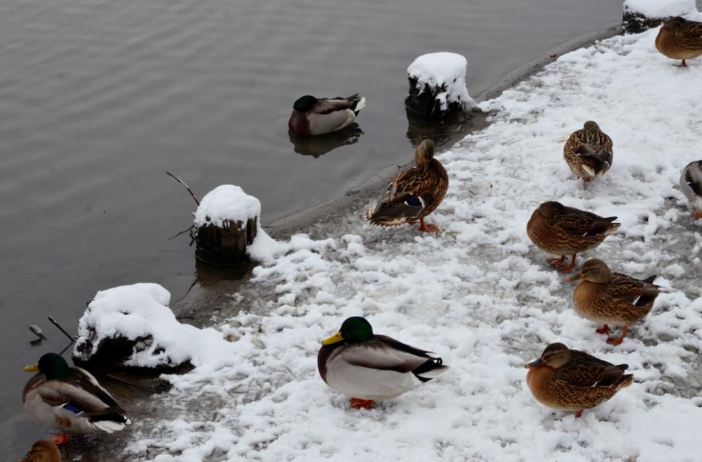 Стали известны места для кормления животных и птиц в столице