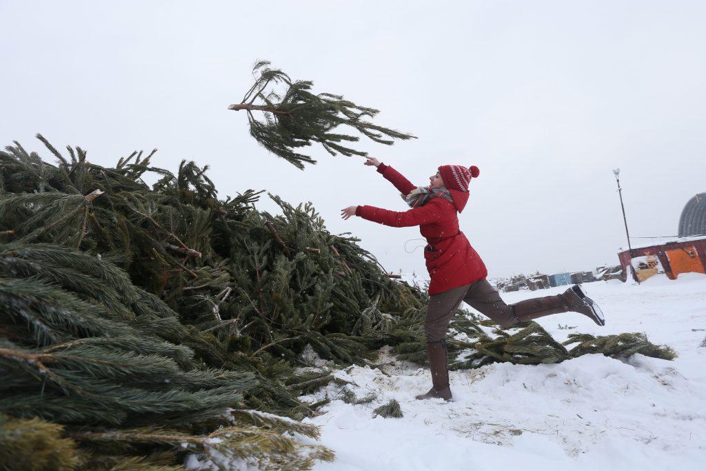 Москвичи выберут, где установить пункты для сдачи елок в переработку