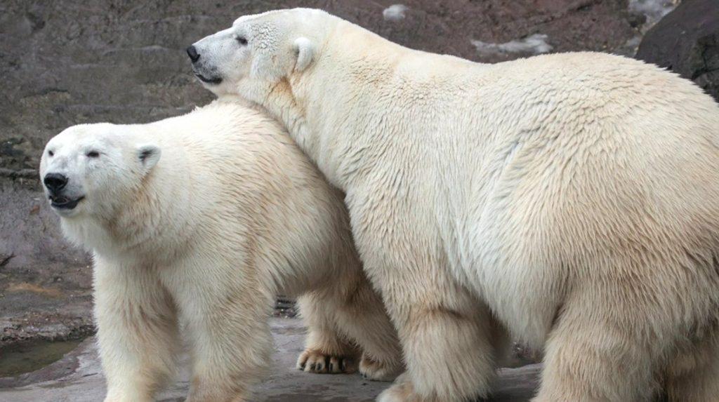 График работы в новогодние праздники объявили в Московском зоопарке