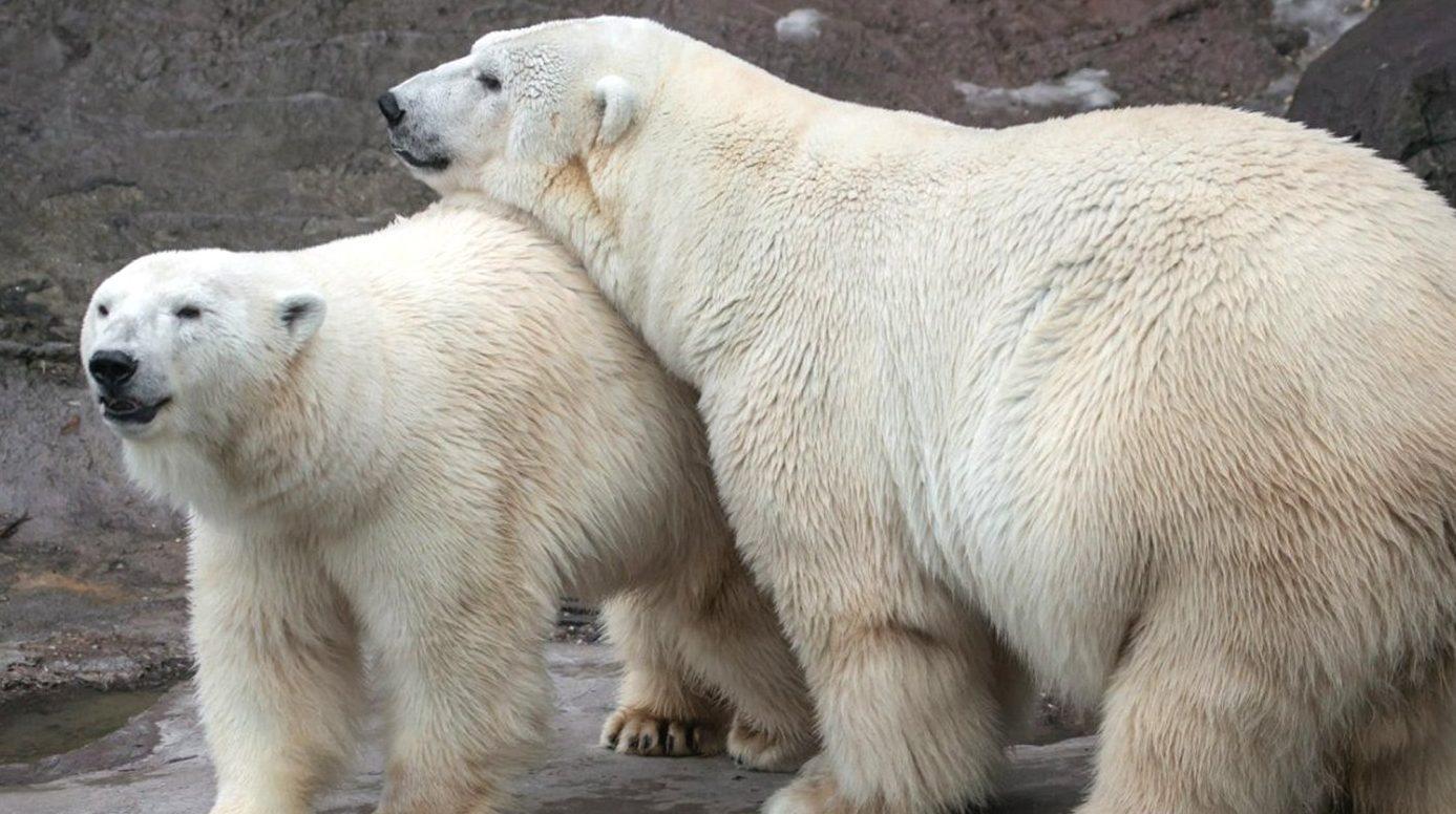 График работы в новогодние праздники объявили в Московском зоопарке. Фото: сайт мэра Москвы