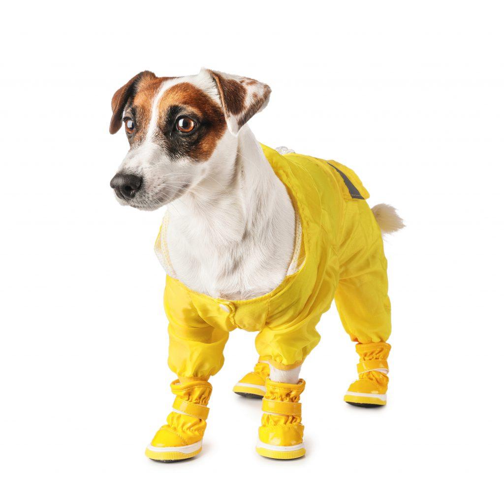 Ботинки для собак должны иметь крепкие и надежные застежки, иначе будут соскальзывать с лап. Фото: DEPOSITPHOTOS