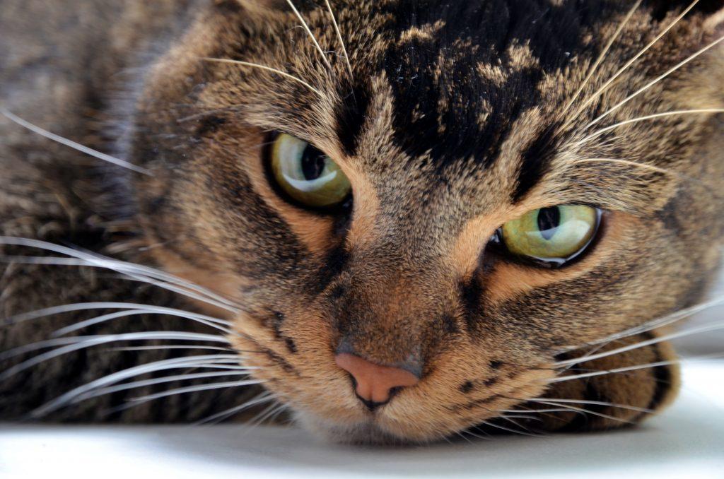 Жителей столицы проинформировали о работе сервиса поиска домашних животных