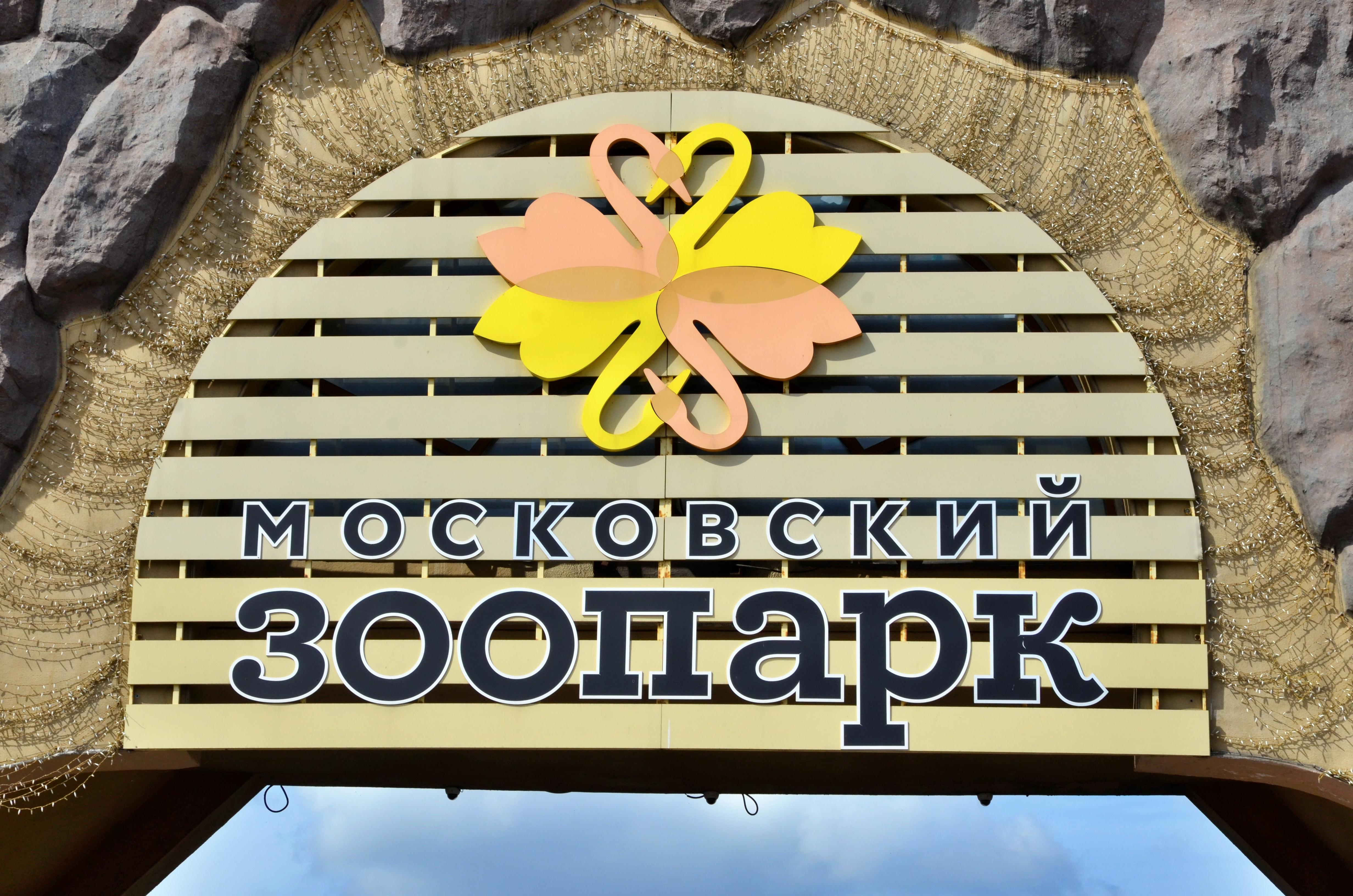 В Московском зоопарке рассказали, как поздравили животных с Новым годом. Фото: Анна Быкова