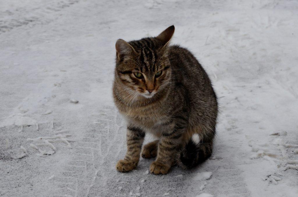 Новую вакансию специалиста по подсчету котов открыли в Москве
